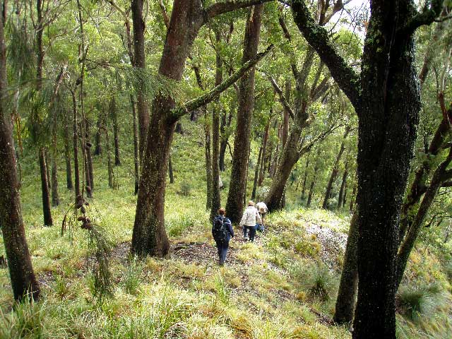 bushwalks mount royal national park barrington tops